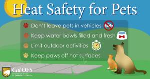 Pet Heat Safety Tips